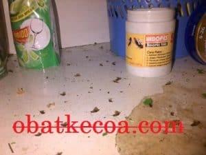 kecoa mati 1 300x225 - 21 Cara Paling Jitu Membasmi Kecoa Secara Mudah di Rumah