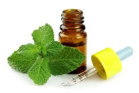 minyak peppermint - 21 Cara Paling Jitu Membasmi Kecoa Secara Mudah di Rumah